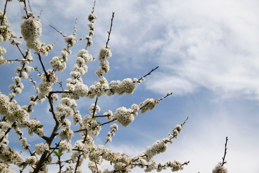 Mixtape – Welcome Spring
